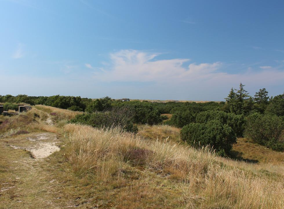 View of the plantation, the holiday homes and the dunes in Fanø Bad from a hill in Fanø, Grøndal