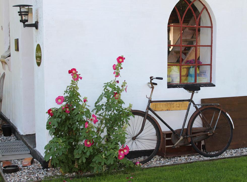 The bicycle of the miller is parked next to the hollyhocks by the mill Fejø Mølle