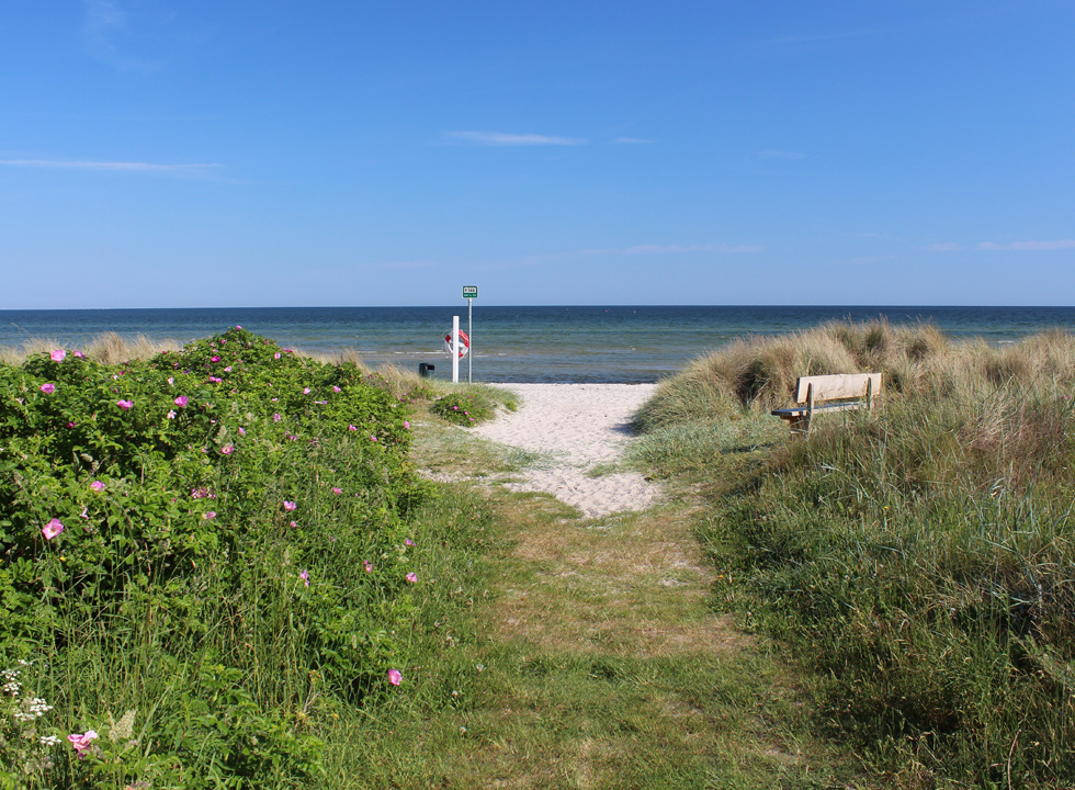 Path, leading to the lovely sandy beach, which is surrounded by green nature, in the holiday home area Fjellerup Strand