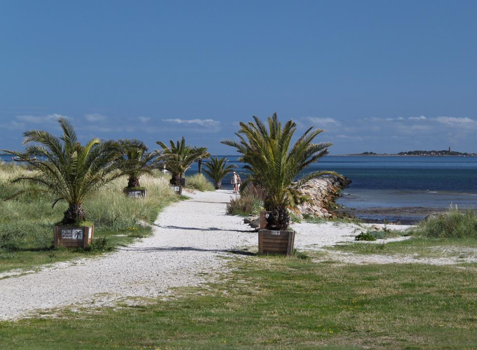 Palm avenue by the pier and the beach with the islands Hirsholmene in the background