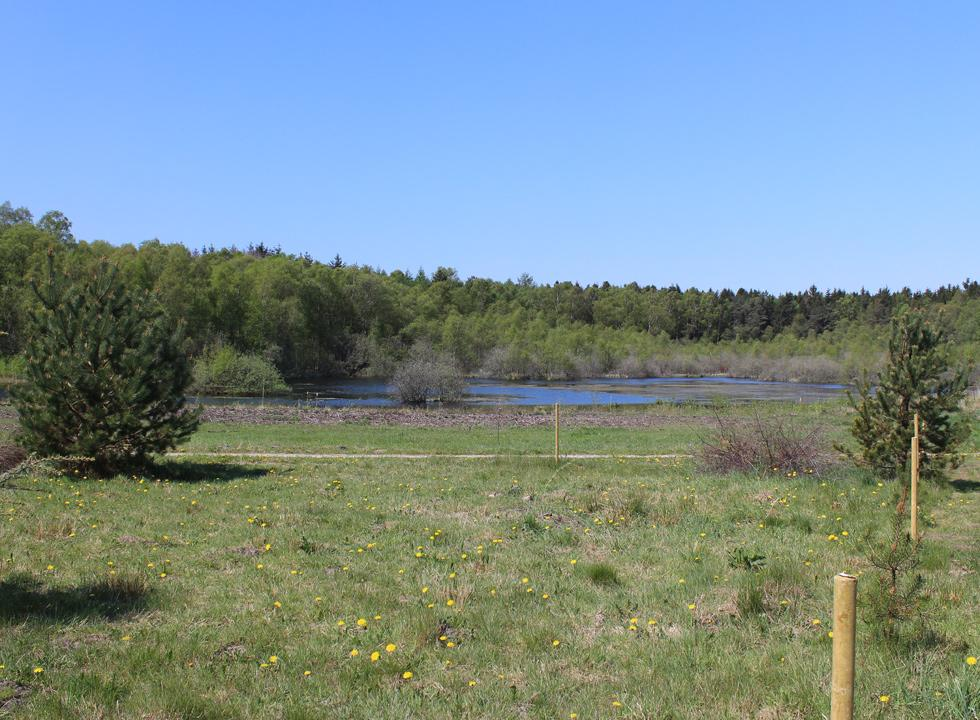 Some of the holiday homes in Fuglslev have view of a small lake