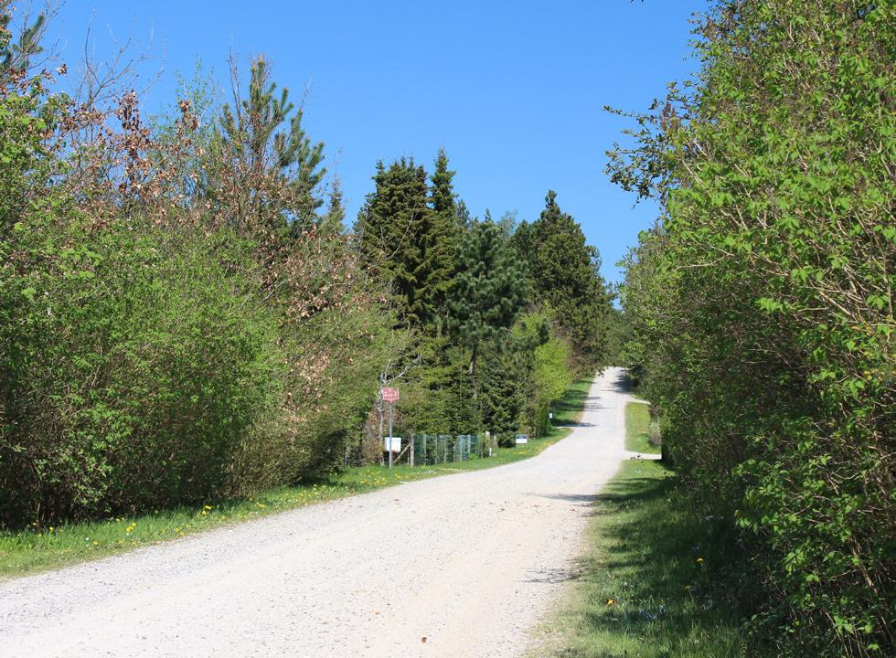 Road with holiday homes in Fuglslev with high and sheltering trees