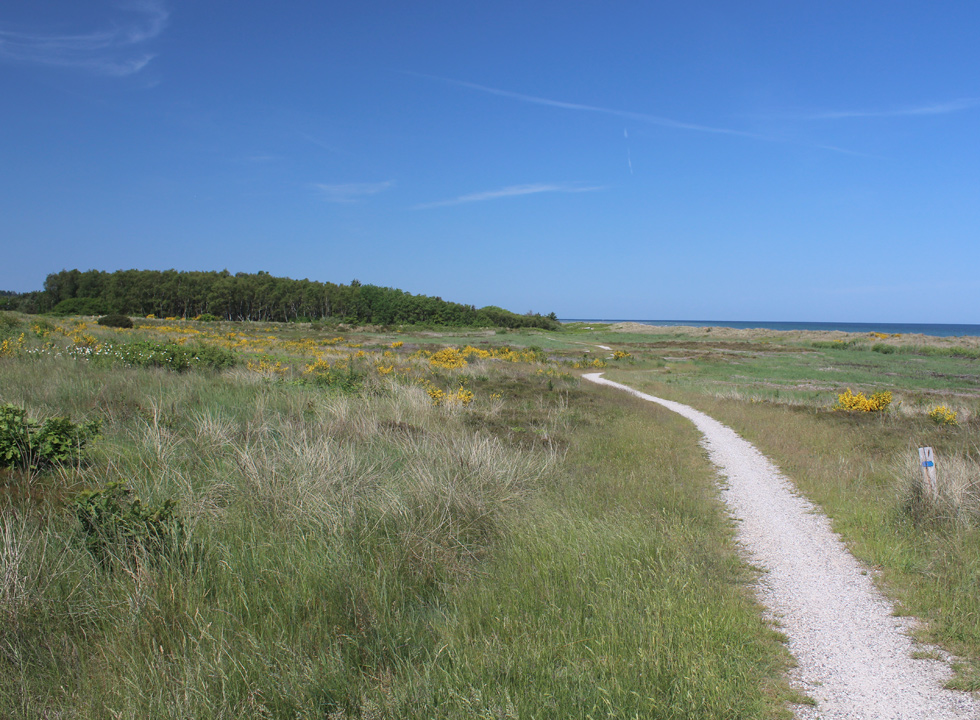 A path, which connects the holiday towns on the northern part of Djursland, leads through the nature area between the beach and the holiday homes in Gjerrild
