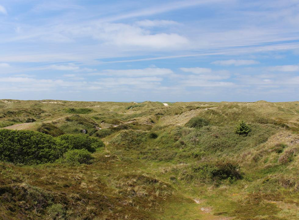 A path leads you through the hilly dune heath between the holiday homes of Grærup and the North Sea