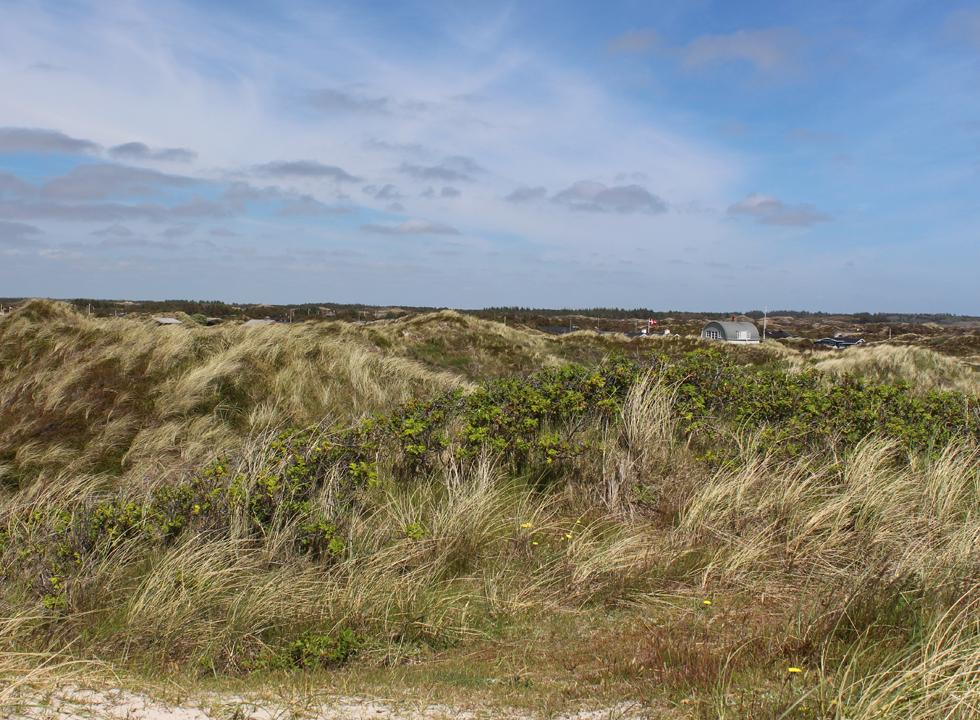 The holiday homes in Grærup are situated behind the beach and the hilly dune area