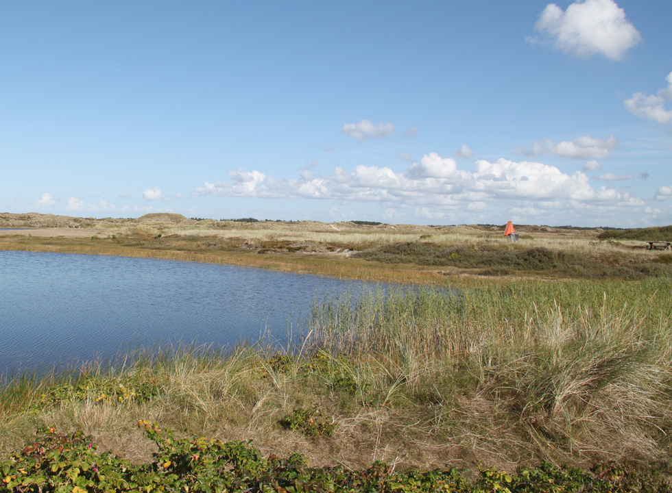 The holiday home area Grærup and the fishpond are surrounded by a scenic dune landscape