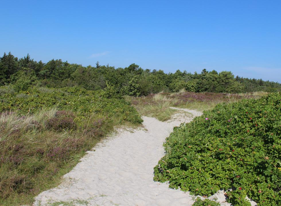 The path, leading to Grenå Strand, takes you through the beautiful moor