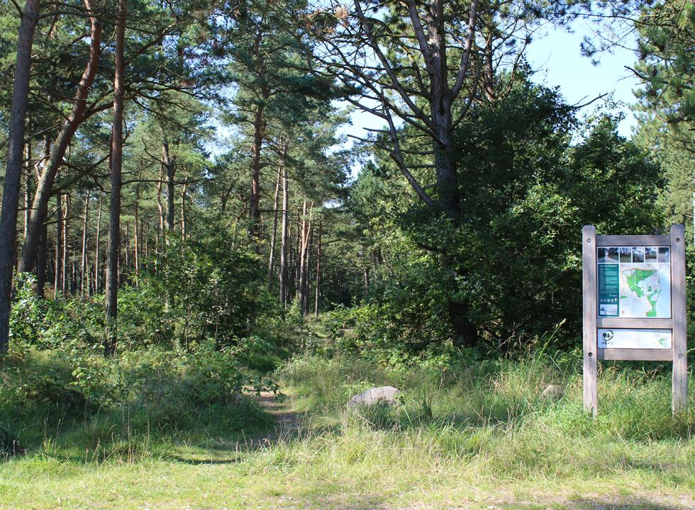 Behind the beach and the moor, you can explore the forest of Grenå Strand