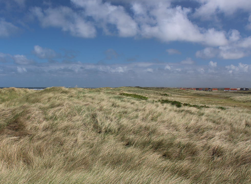 Dunes by the North Sea and the holiday homes in Harboør
