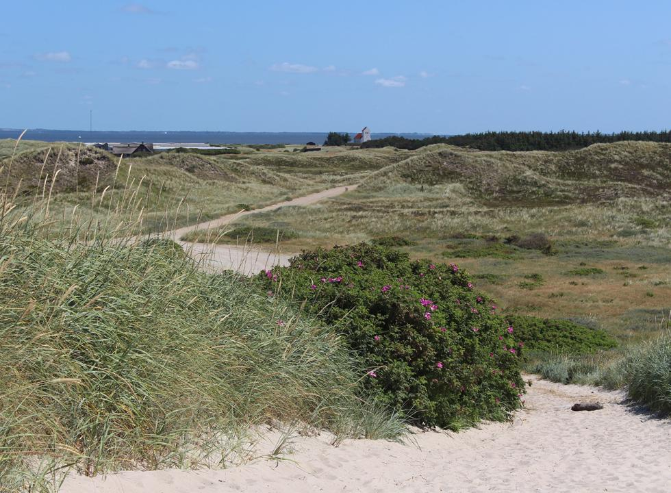 View of the dune landscape on the tongue Holmsland Klit, the church Haurvig Kirke and the bay Ringkøbing Fjord from the dunes by the beach in Haurvig