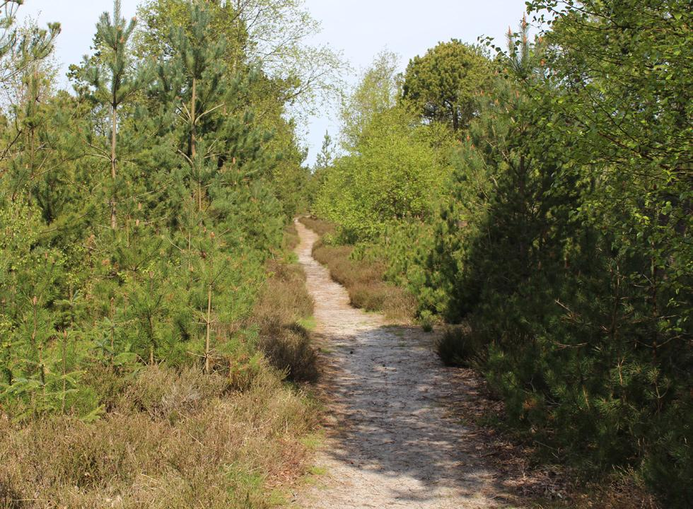 One of the paths in the holiday home area of Helberskov