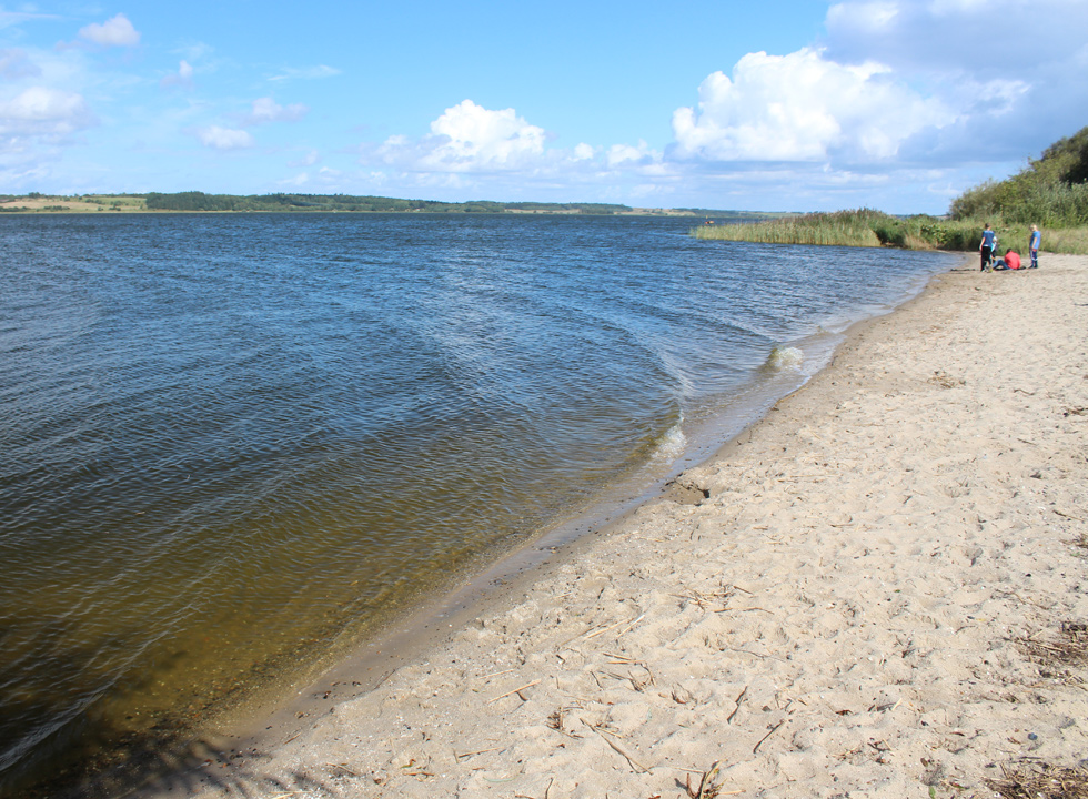 The bathing water is clear by the sandy beach in Hjarbæk