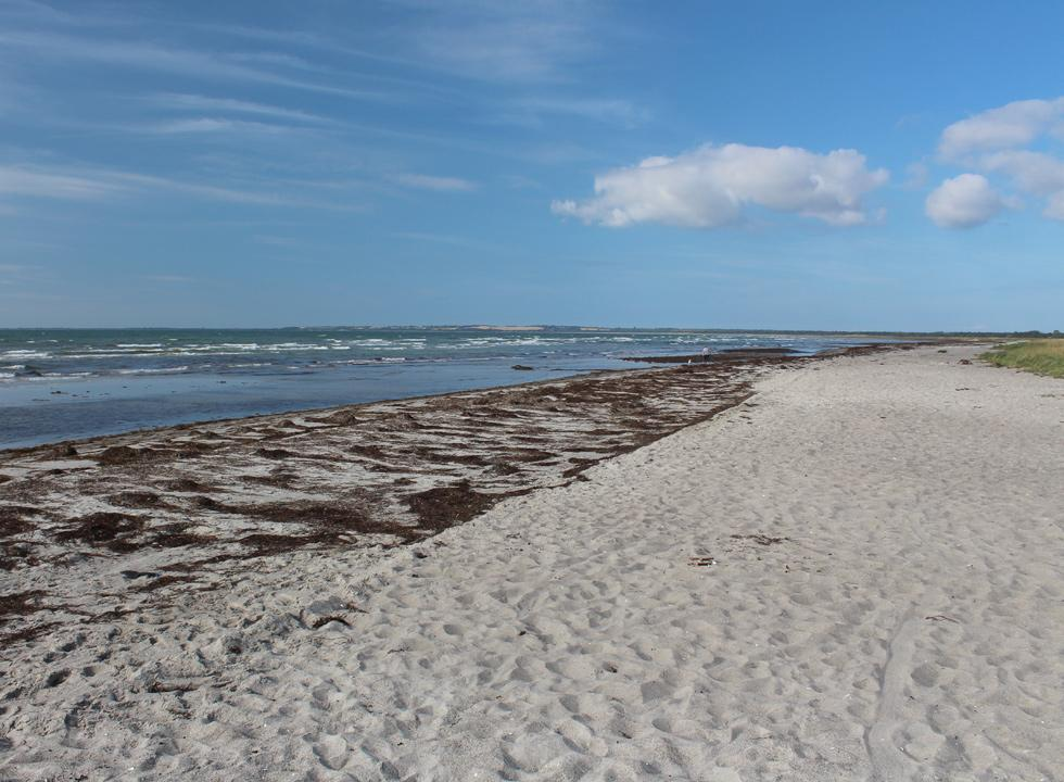 Long and wide sandy beach in the holiday area Hønsinge Lyng