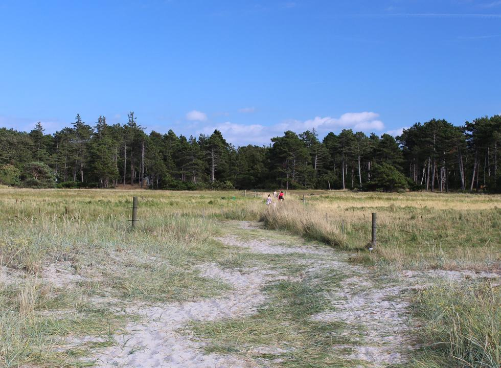 The path, leading from the beach in Hønsinge Lyng, to the forest area with holiday homes