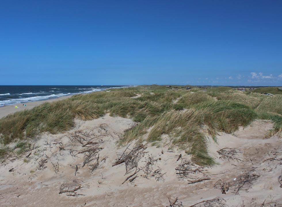 The holiday homes in Houvig are located behind the high dunes of the beach