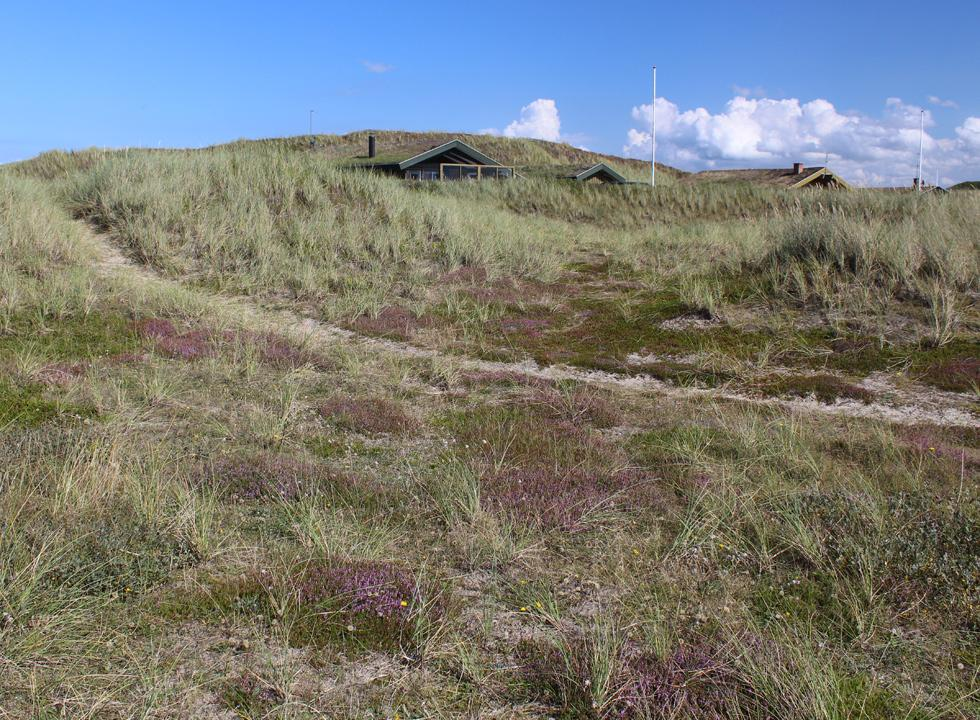 You will find plenty of hiking paths in the scenic dune landscapes around the holiday homes in Houvig