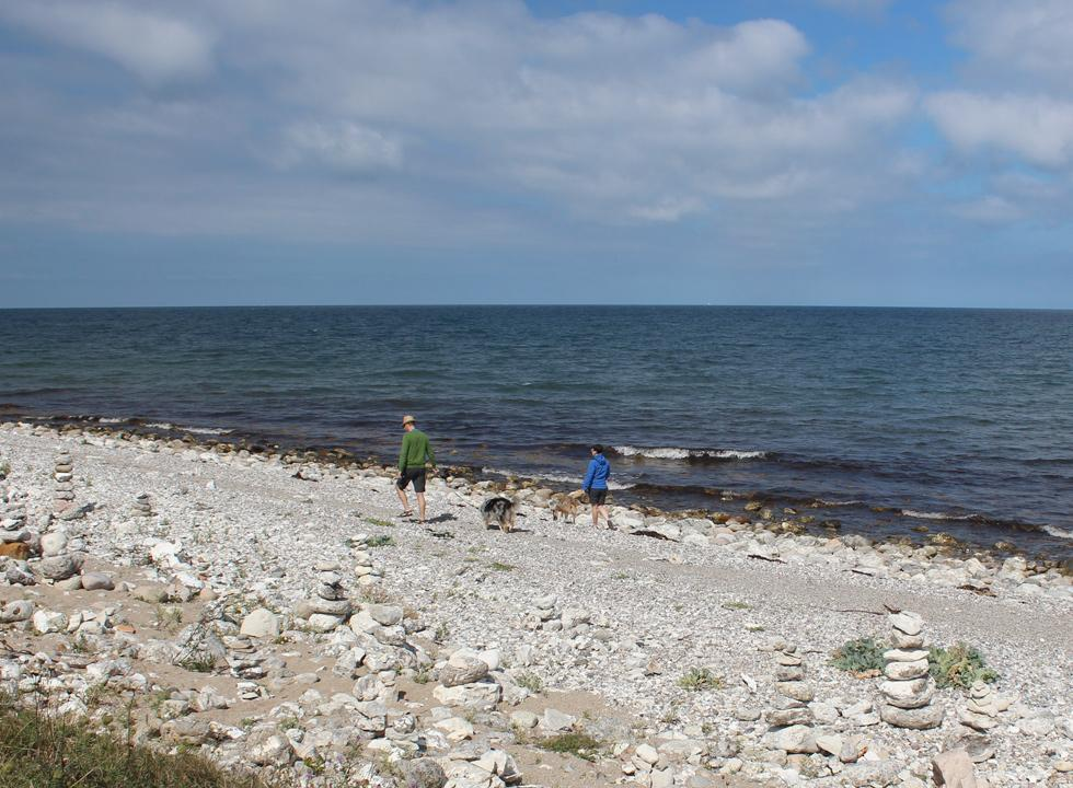 A couple with two dogs by the shore in Klint