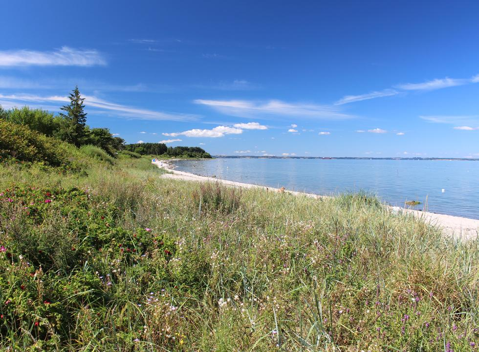 The long sandy beach in the holiday home area Købingsmark is surrounded by luxuriant nature
