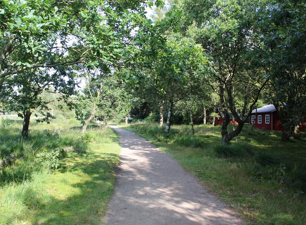 Along the path, which surrounds the lake Kvie Sø, you will find holiday homes in forrest surroundings