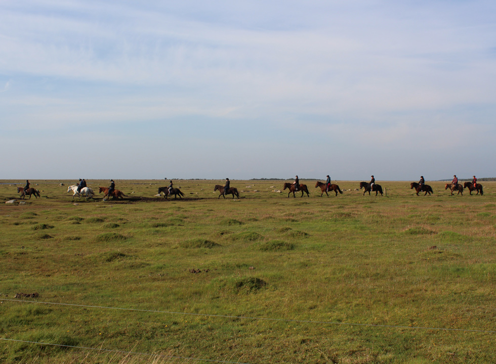 A ride on Icelandic horses in the nature area Rønnerne, 2 km from Byrum on Læsø