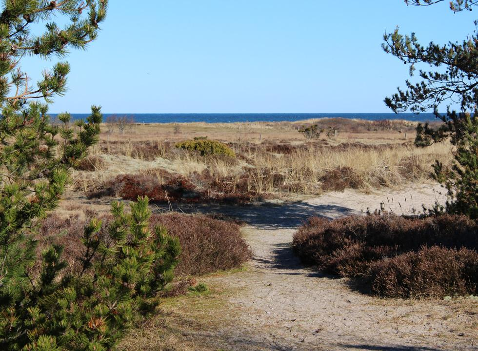 Lovely nature area between the holiday homes in Nordmarken and the northern shore on Laso
