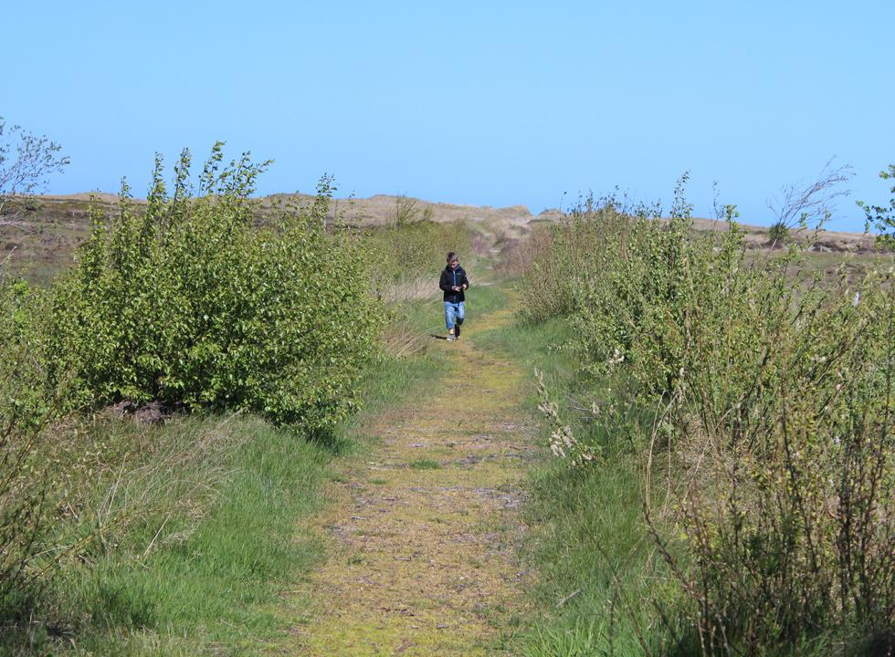 Nature path between the beach and the holiday homes in Nordmarken on Laso