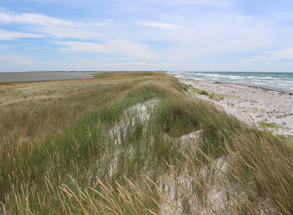 Bathing beach on one side and plants on the other side of the dunes on the Laso island Stokken