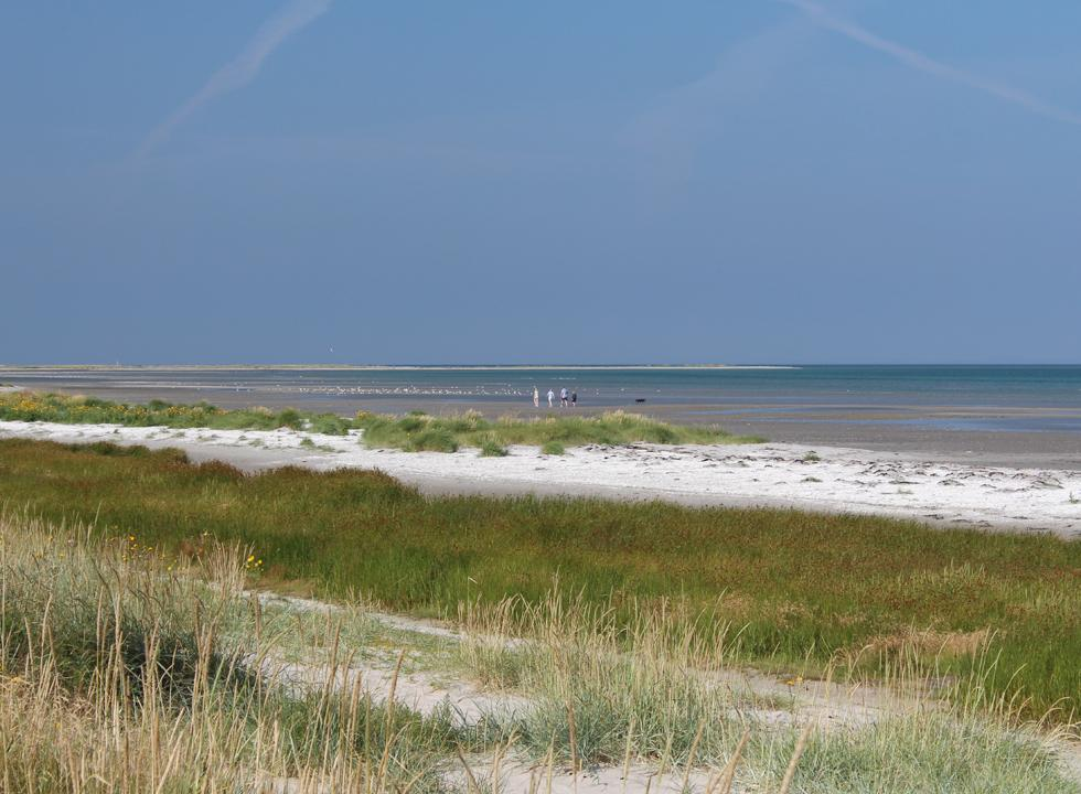 The beach in the southern part of the holiday home area Vestero Syd offers small dunes and shallow water