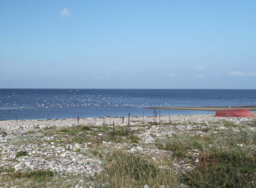You can experience a rich birdlife by the Limfjord beach in Lendrup