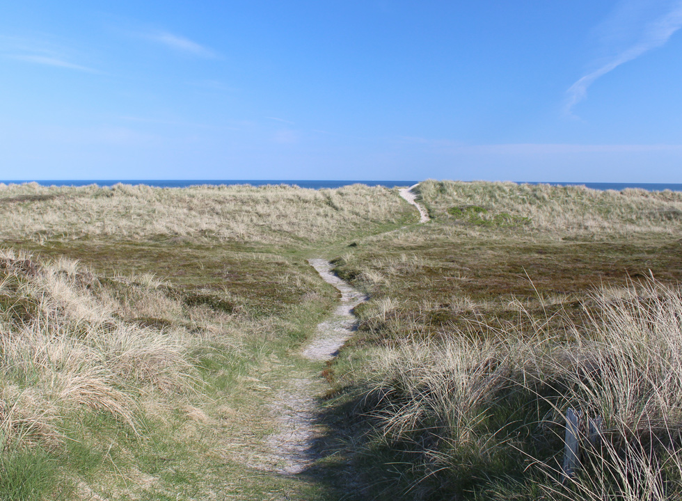 Path between the dunes towards the beach in the holiday home area Lild Strand