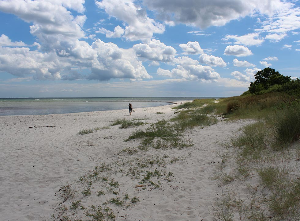 Wide sandy beach with small dunes in Spodsbjerg, a few km from your holiday home in Lokkeby