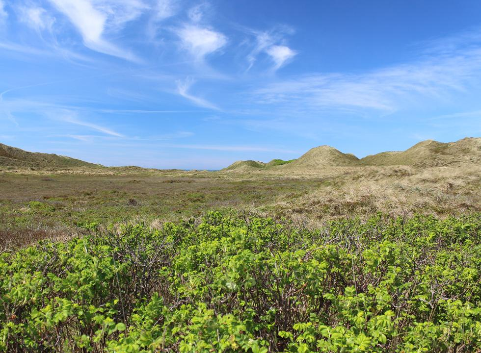 Impressive dune landscape in the northern part of Lyngby, Thy
