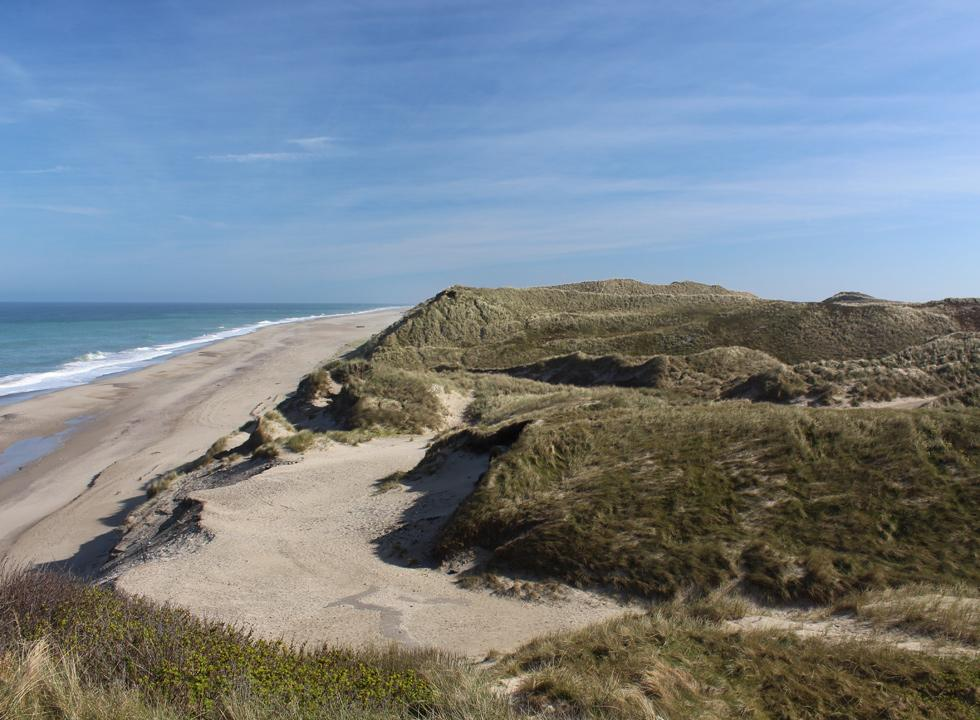 High soft dunes behind the beach and the North Sea in Lyngby, Thy