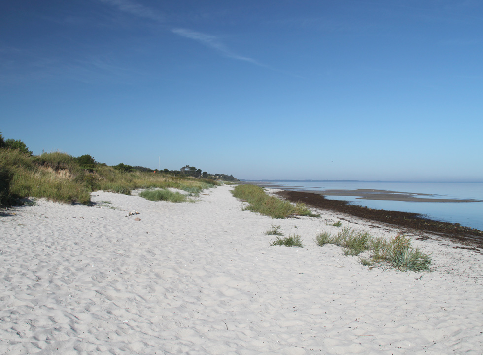 Fine sandy beach with vegetation and shallow child-friendly bathing water in Lystrup