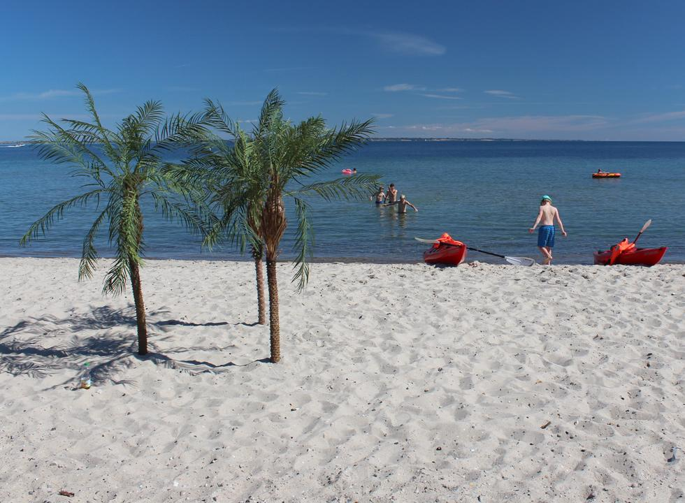 Small palm trees in the white sand by the bathing beach in Mommark