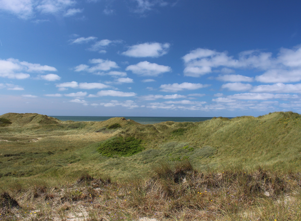 The untouched dune area behind the beach of Nr. Lyngvig
