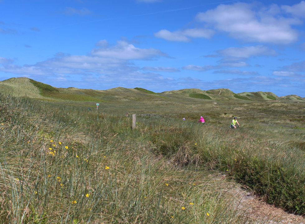 You can cycle and walk along the many paths in the dune area between the holiday homes and the beach of Nr. Lyngvig