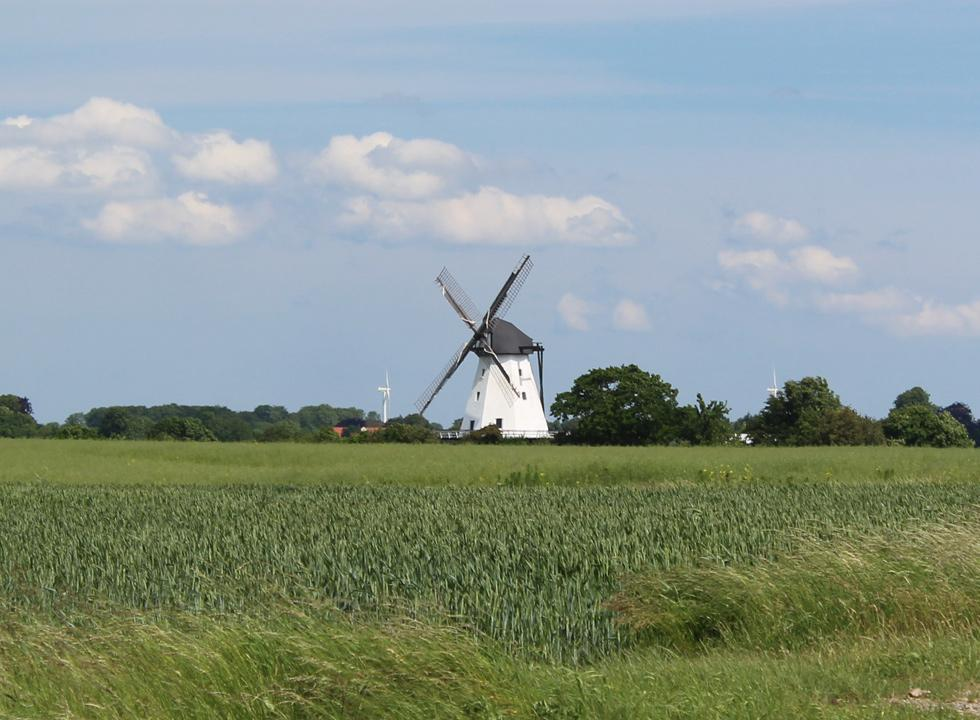 The mill Sillerup Mølle is situated between the fields behind Ørby Hage Strand