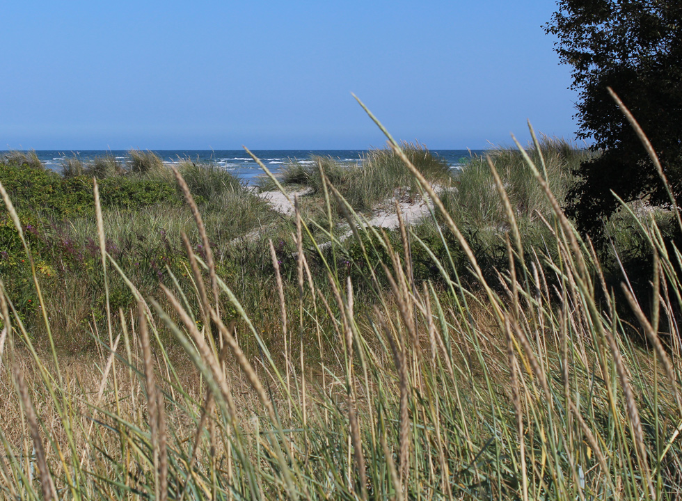 The sheltering dunes by the beach of Oster Hurup