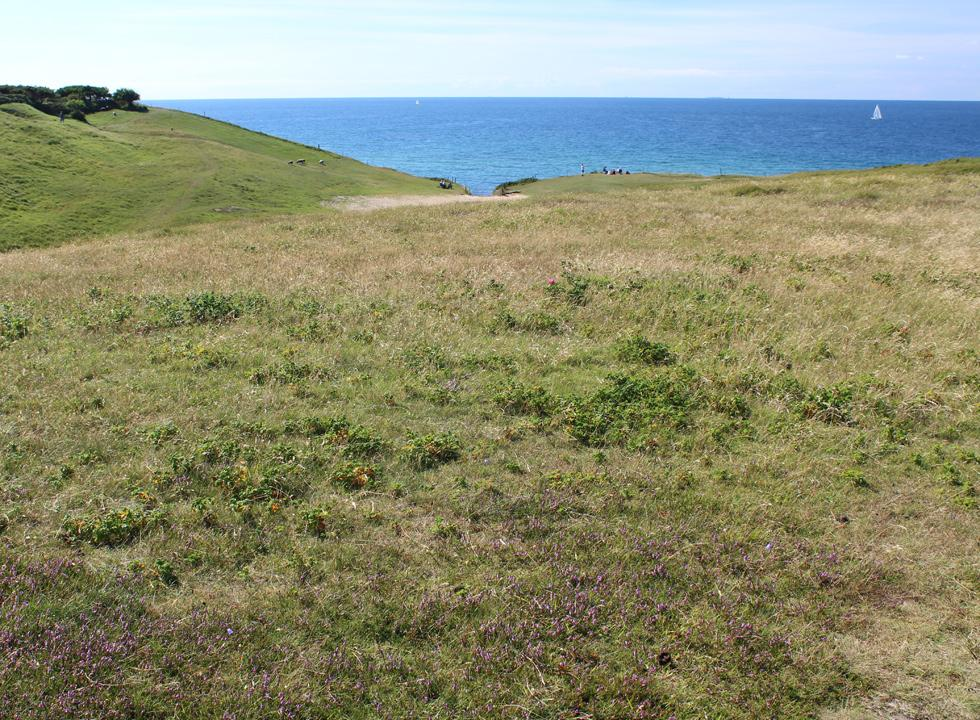 View of the sea from Heaterhills near Rågeleje