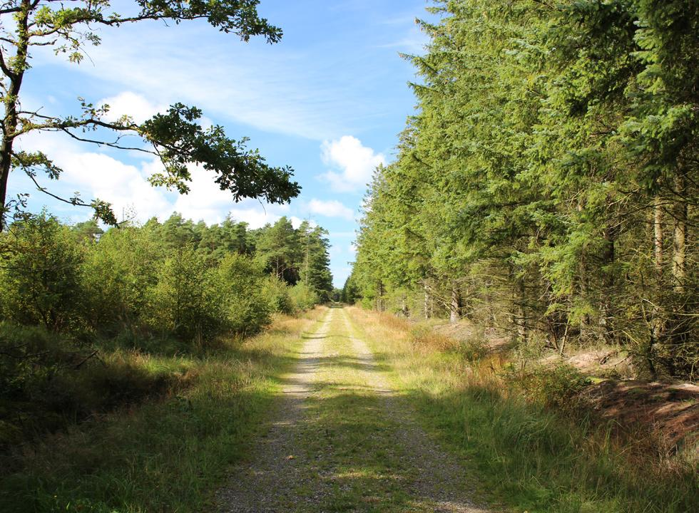 Behind the holiday area Rødhus nature is characterized by beautiful forests and plantations
