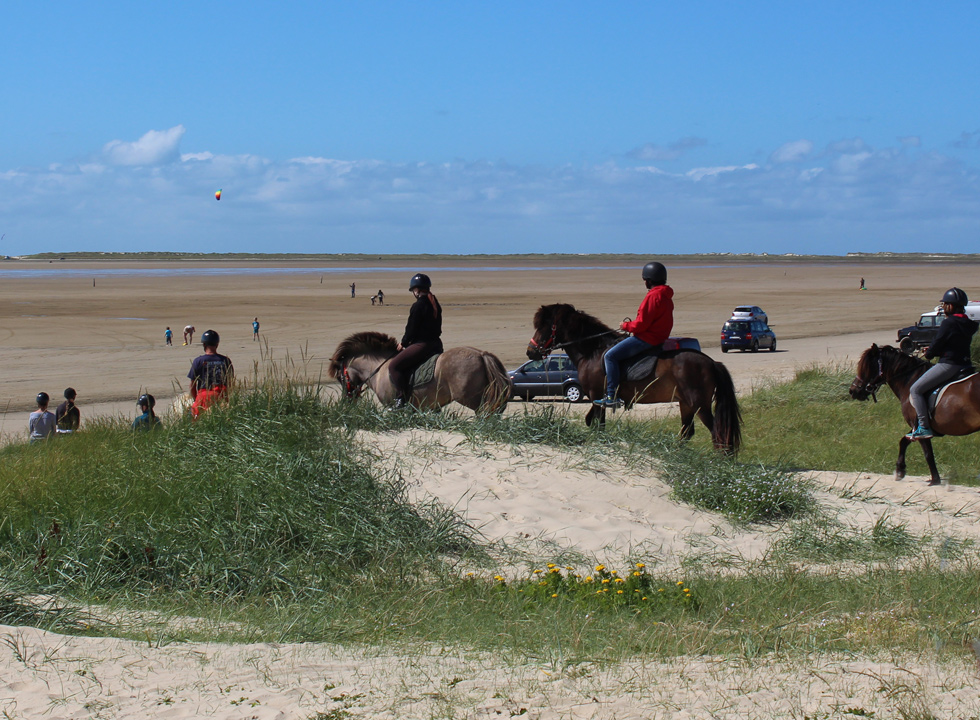 Try a ride on Icelandic horses on the wide sandy beach Sonderstrand near Havneby on Romo