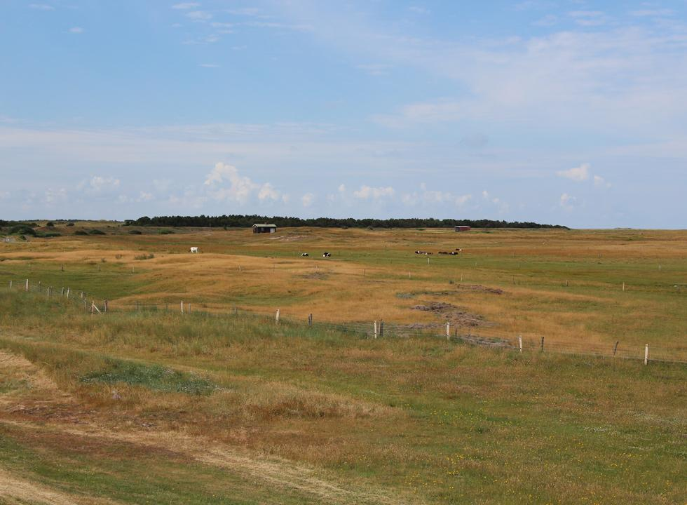 The holiday home area Toftum is surrounded by open moor areas with grazing animals