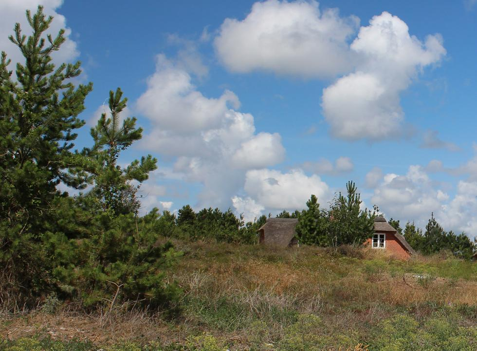 The holiday homes in Romo, Toftum are located undisturbed in a scenic moor landscape with woods