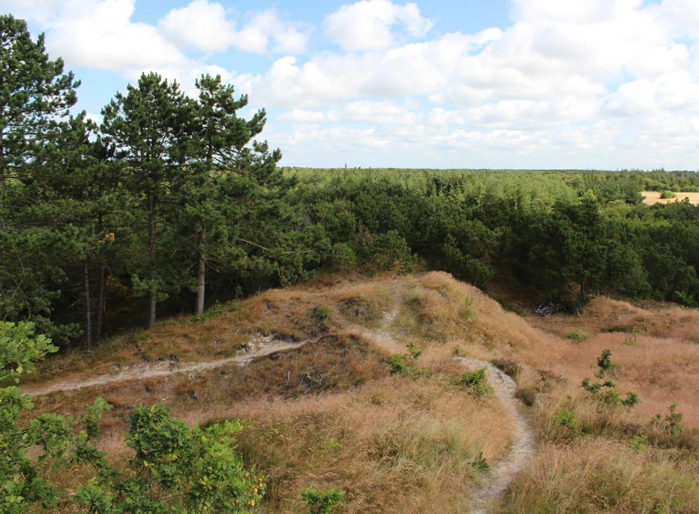 The view from the highest point on Romo, Spidsbjerg, in the plantation Kirkeby Plantage near Romo, Vadehav