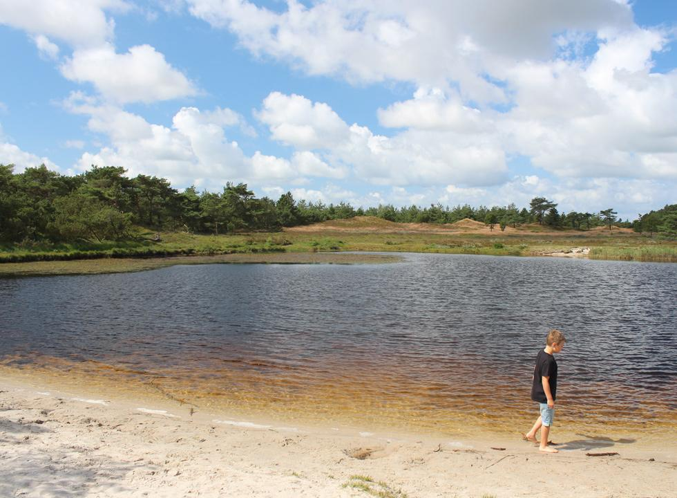 The plantation Kirkeby Plantage by Romo, Vadehav is very scenic and contains more lakes