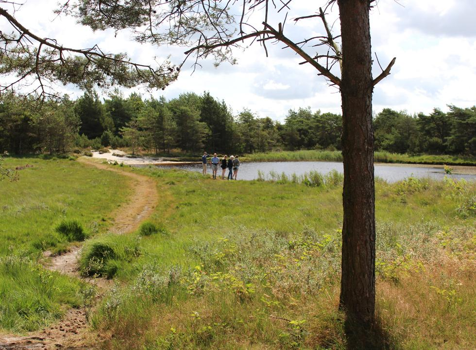 One of the lakes in Kirkeby Plantage, near Romo, Vadehav, offers a small sandy beach
