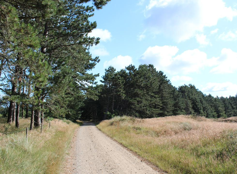 You can walk, cycle and even drive in car in the plantations, which surround Rømø, Vesterhede