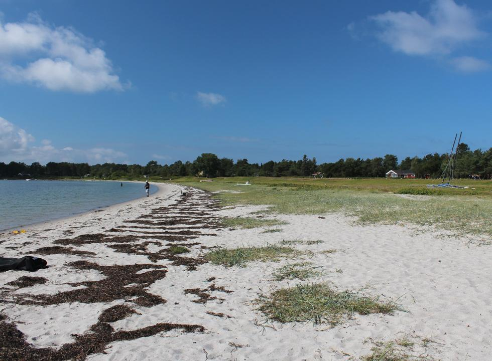 Fine sandy beach in the holiday home area Rørvig on North Sealand