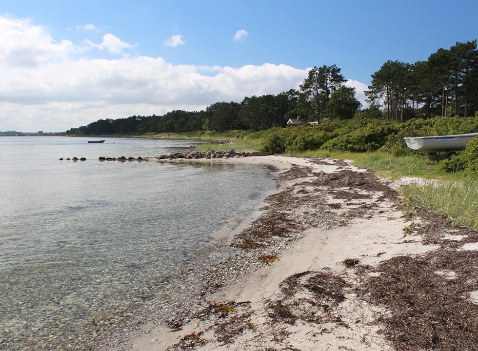 View of the beach and the forest with holiday homes in Rørvig